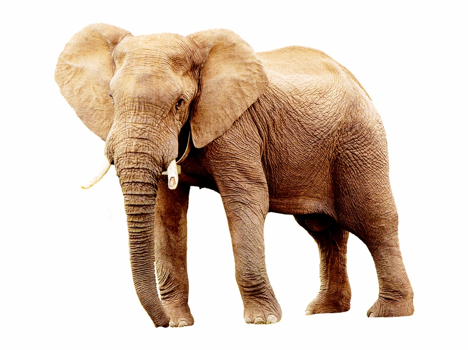 Elephant, Animal, Animals, Africa, Portrait.