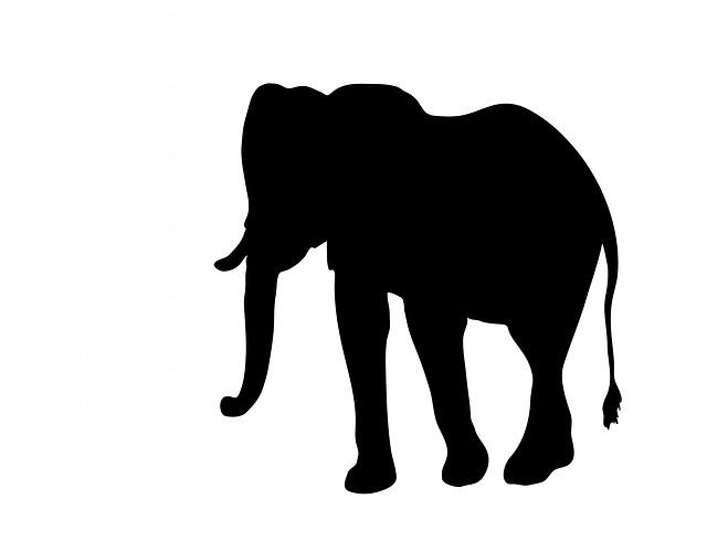 Free pictures ELEPHANT.
