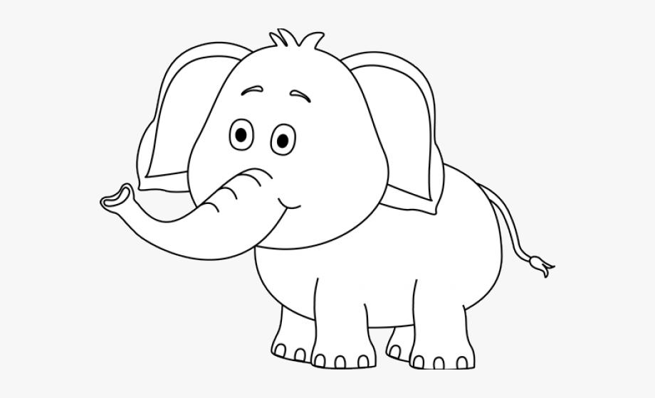 Elephant Black And White #280230.