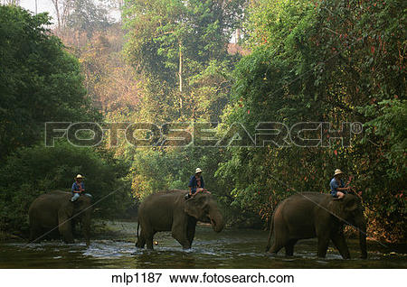 Picture of Chiang Dao Elephant camp, north of Chang Mai, northern.