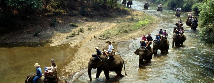 Elephant camp clipart #4