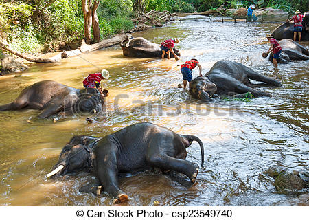 Stock Photo of Thai elephant was take a bath with mahout (elephant.