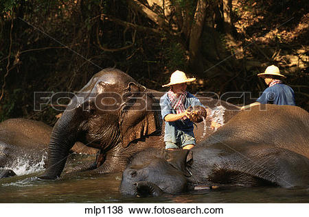 Pictures of Chiang Dao Elephant camp, north of Chang Mai, northern.