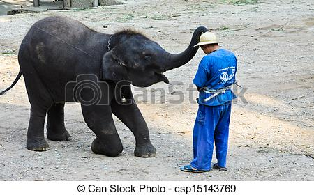 Stock Image of Elephants show at Maesa Elephant Camp on January 19.