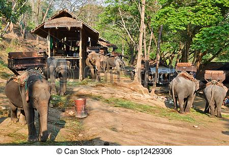 Stock Photography of asia elephant camp in vilage of northern.