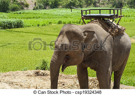Stock Photo of Young elephant in elephant camp..