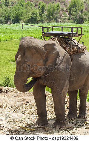 Stock Photography of Young elephant in elephant camp..