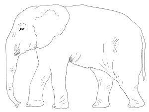 Elephant black and white white elephant images ideas on funny gag.