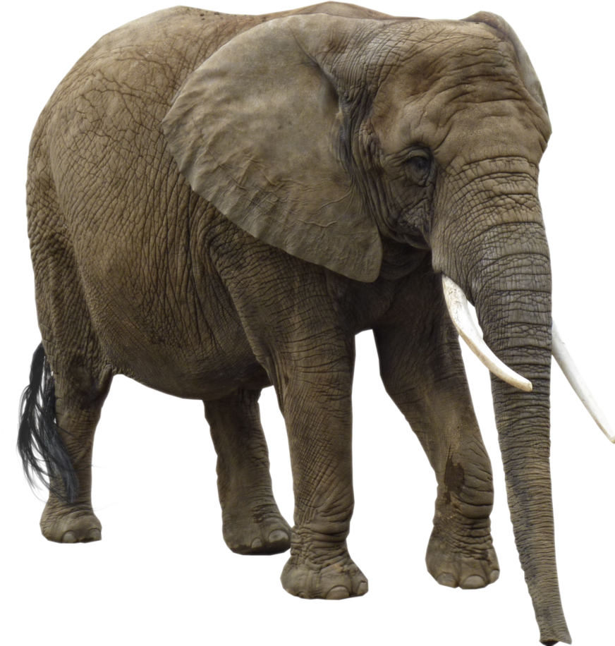 Elephant PNG Transparent Images.