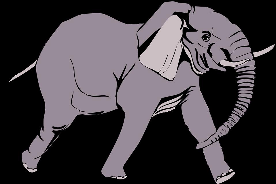 Elephant White Background.