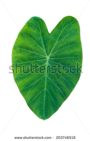 Elephant leaf clipart Clipground