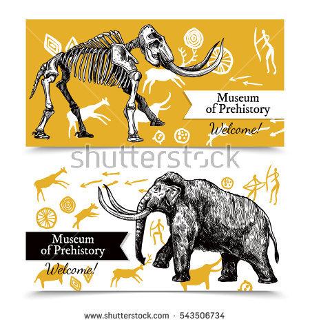 Elephant Skeleton Stock Photos, Royalty.