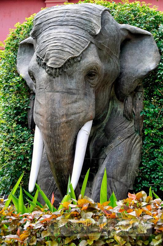 Elephants : Elephant.