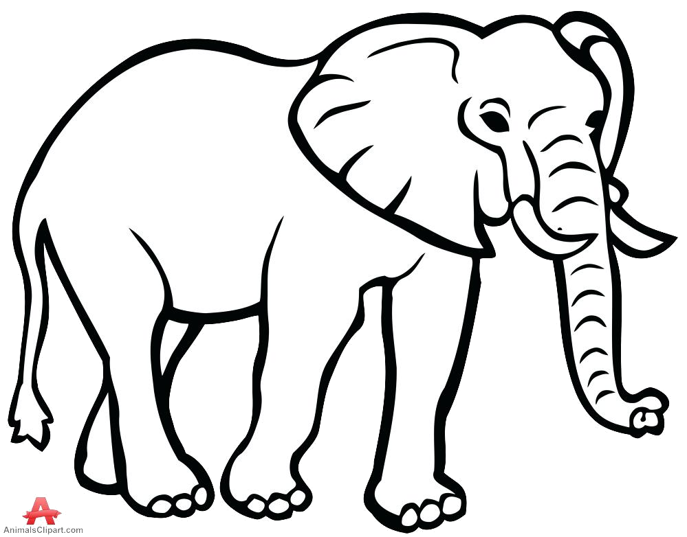 Elephant Outline Drawing Face Clipart Free Transparent Png.