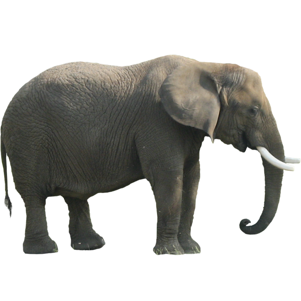 Download Elephant PNG Clipart 1.