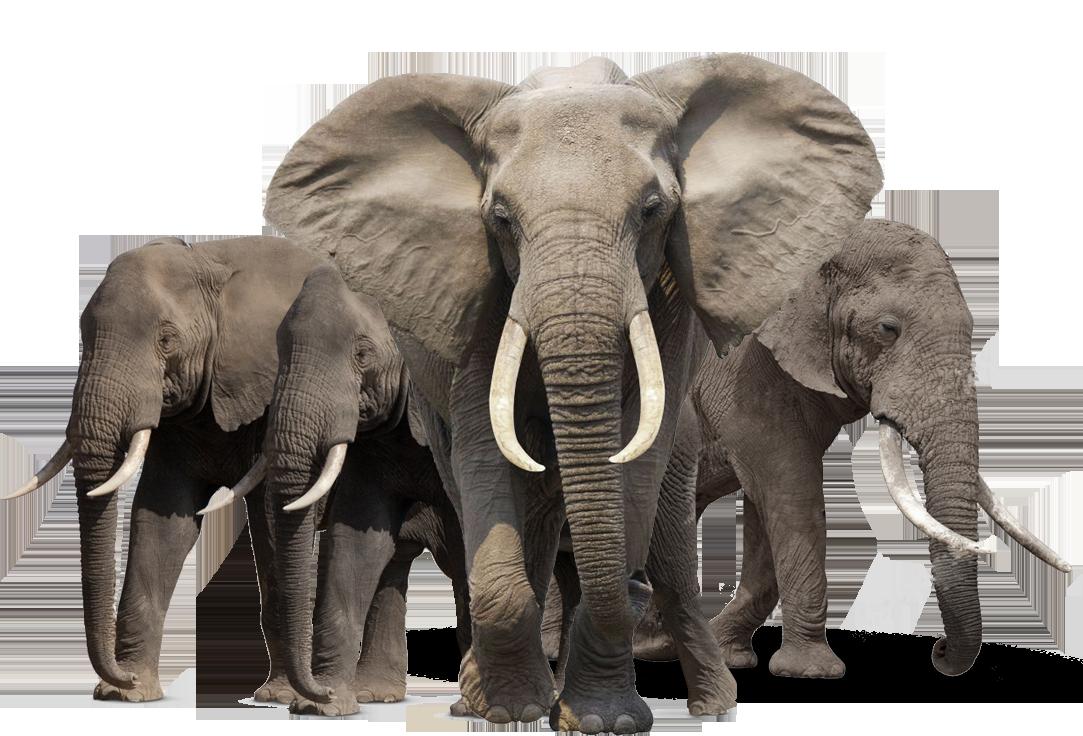 Elephant PNG #34819.