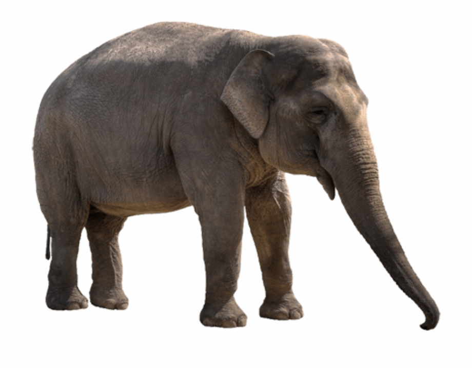 Free Png Elephant Png Images Transparent.