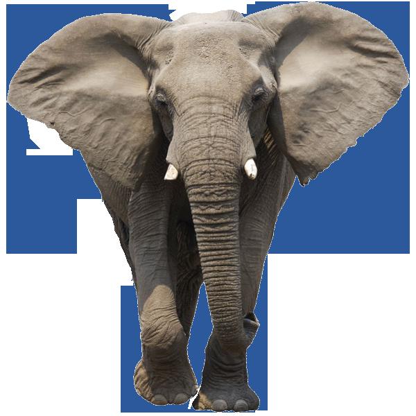 Elephant PNG Transparent Images.