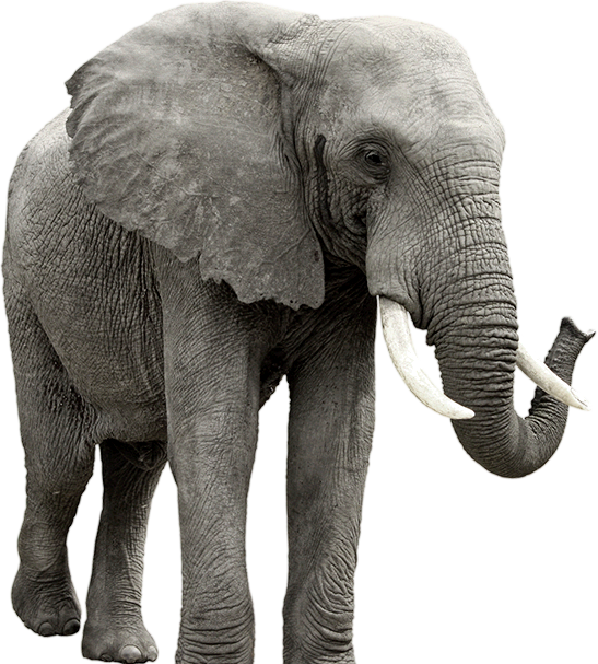 Download Free png Elephant PNG, Download PNG image with transparent.