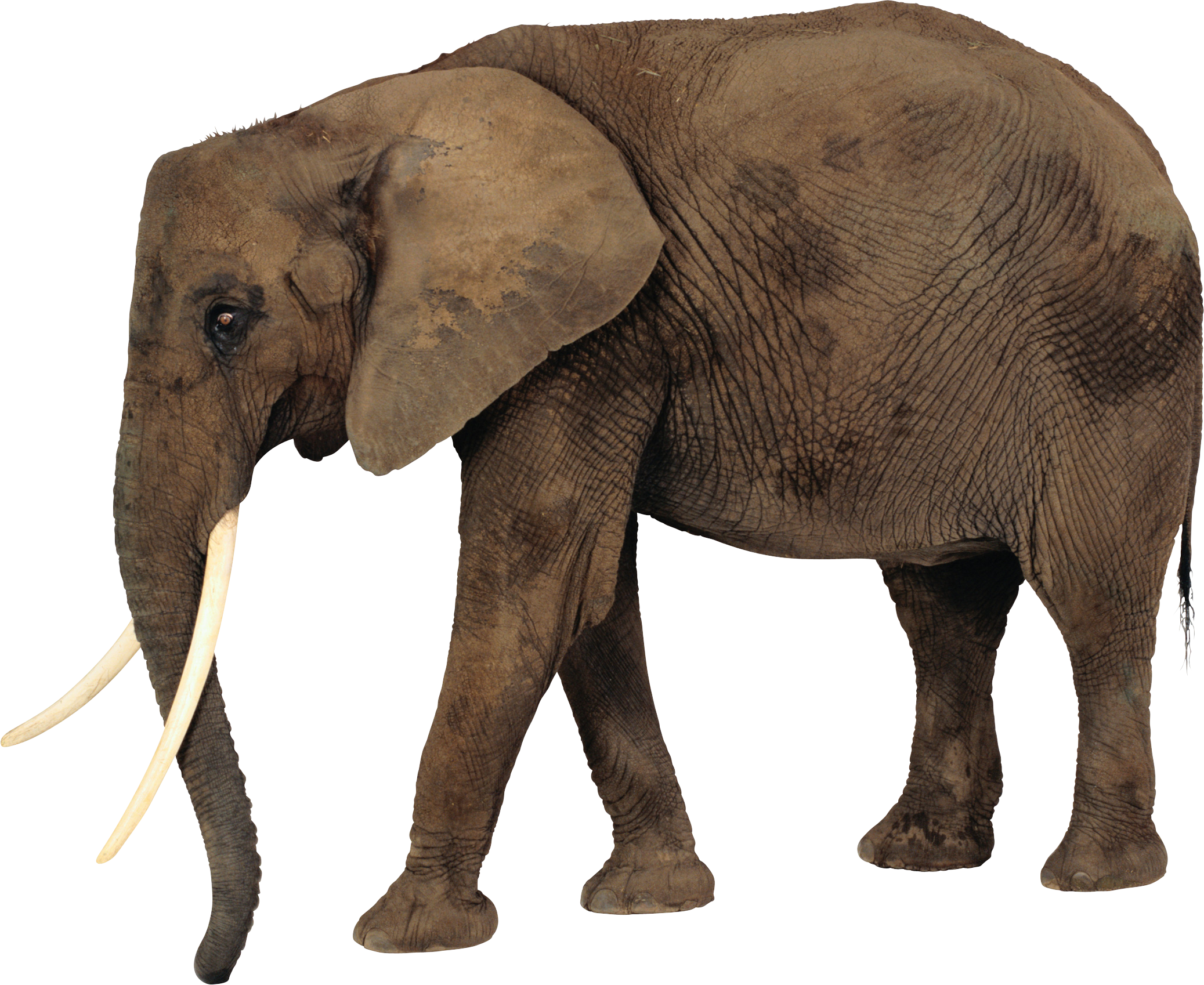 Elephants PNG images free download, Elephant PNG.
