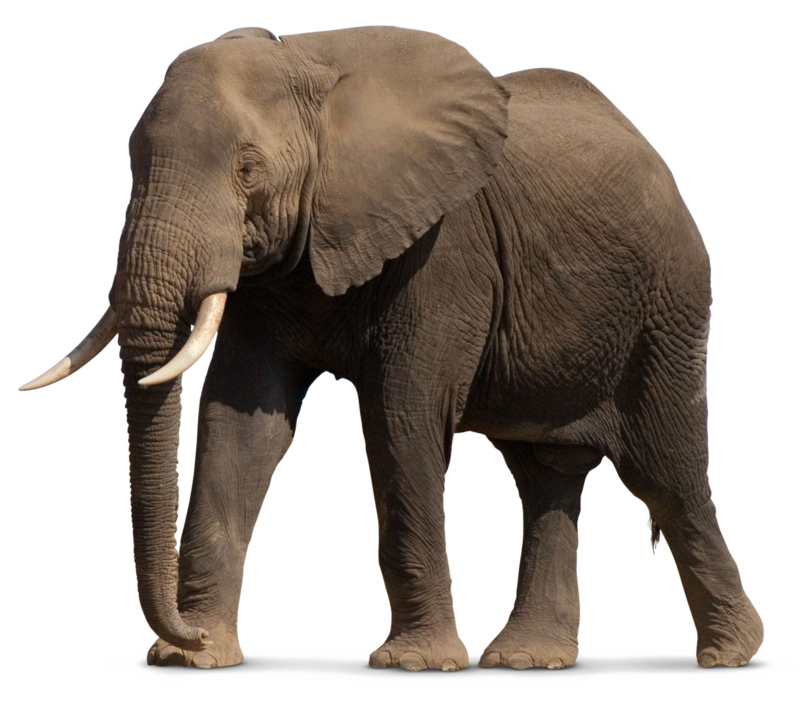 Download Free png African Elephant PNG File.