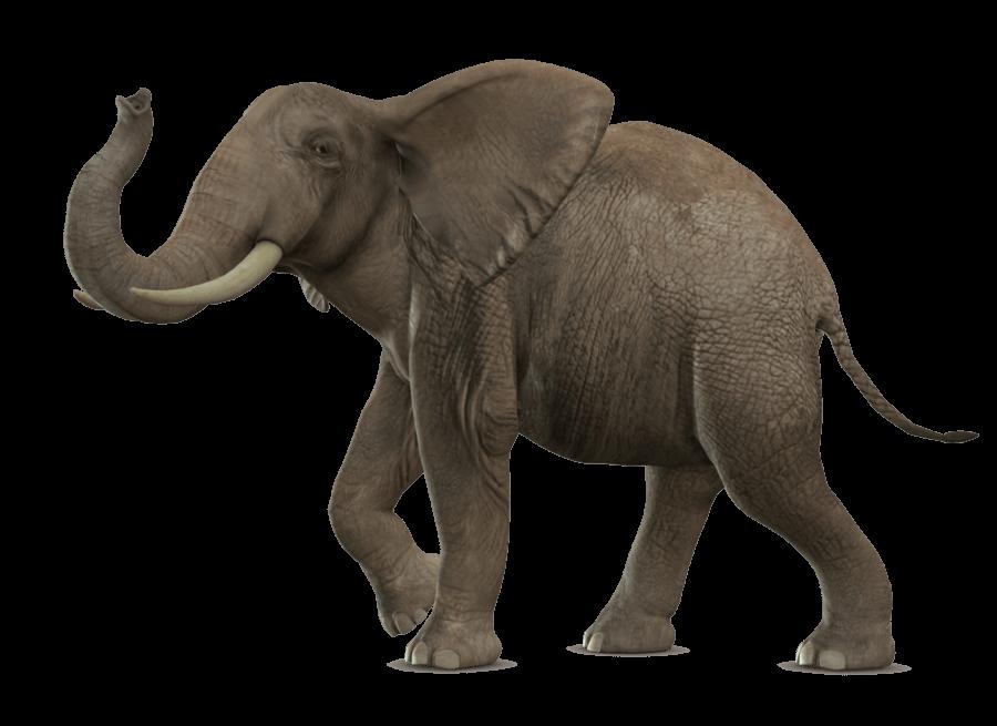 Elephant Walking transparent PNG.