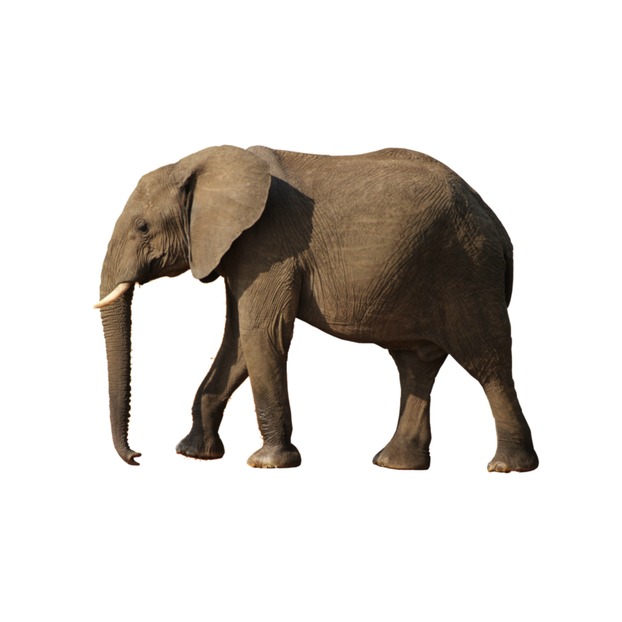 Elephant Walking PNG Transparent Image #17.