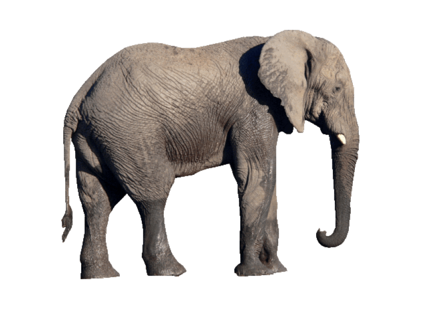 Free Png Elephant PNG Images Transparent #75789.