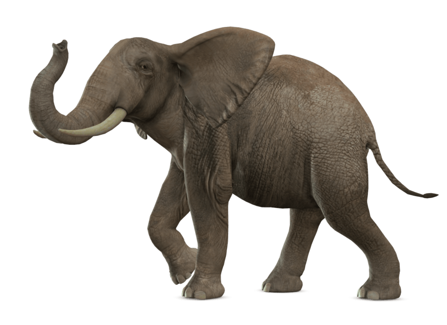Elephant Walking transparent PNG.
