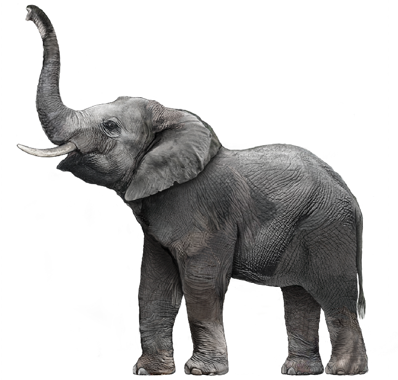 Download Free png Elephant PNG HD Outline Transparent Elephant HD.