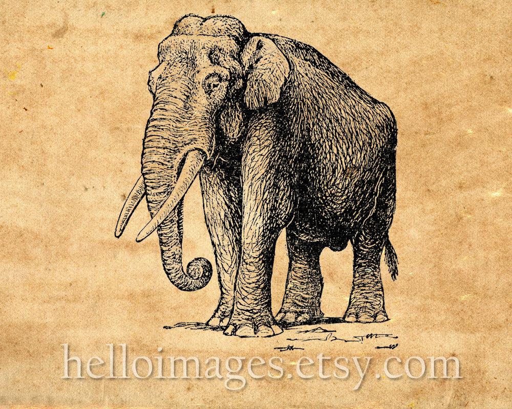 Elephant Clip Art. Vintage Graphic Elephant Print, Instant.