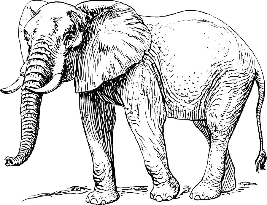 Free Elephant Tusk Clipart, 1 page of Public Domain Clip Art.