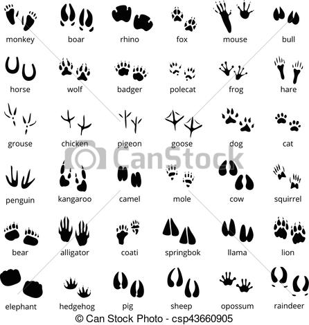 Animal track Clipart Vector Graphics. 8,672 Animal track EPS clip.