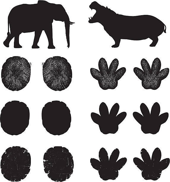 Best Elephant Footprint Illustrations, Royalty.