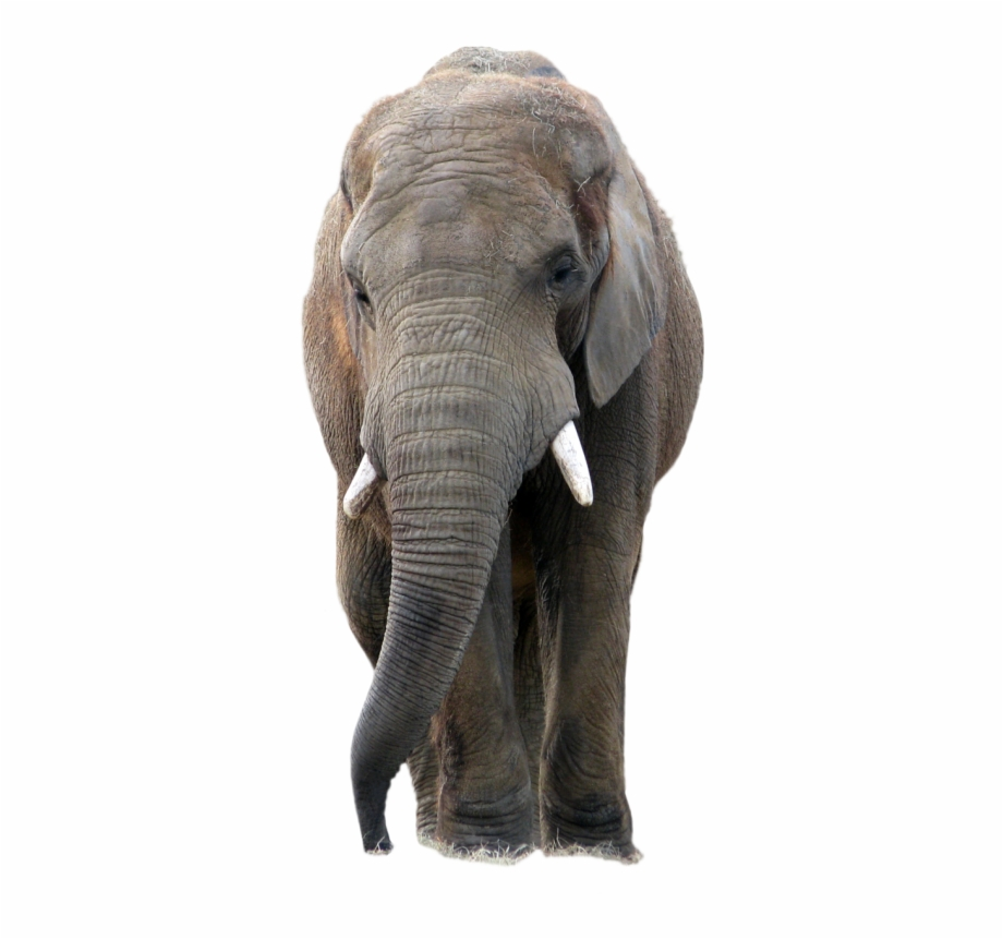 Elephant Png, Download Png Image With Transparent Background.