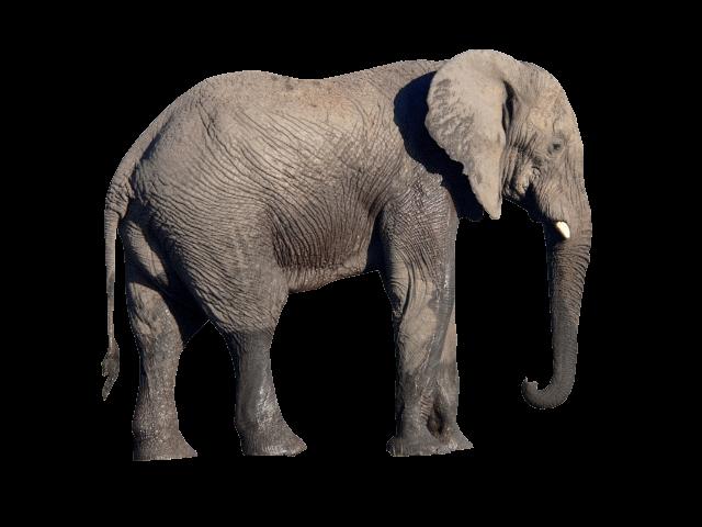 Download Free Elephant PNG Transparent Image #18.