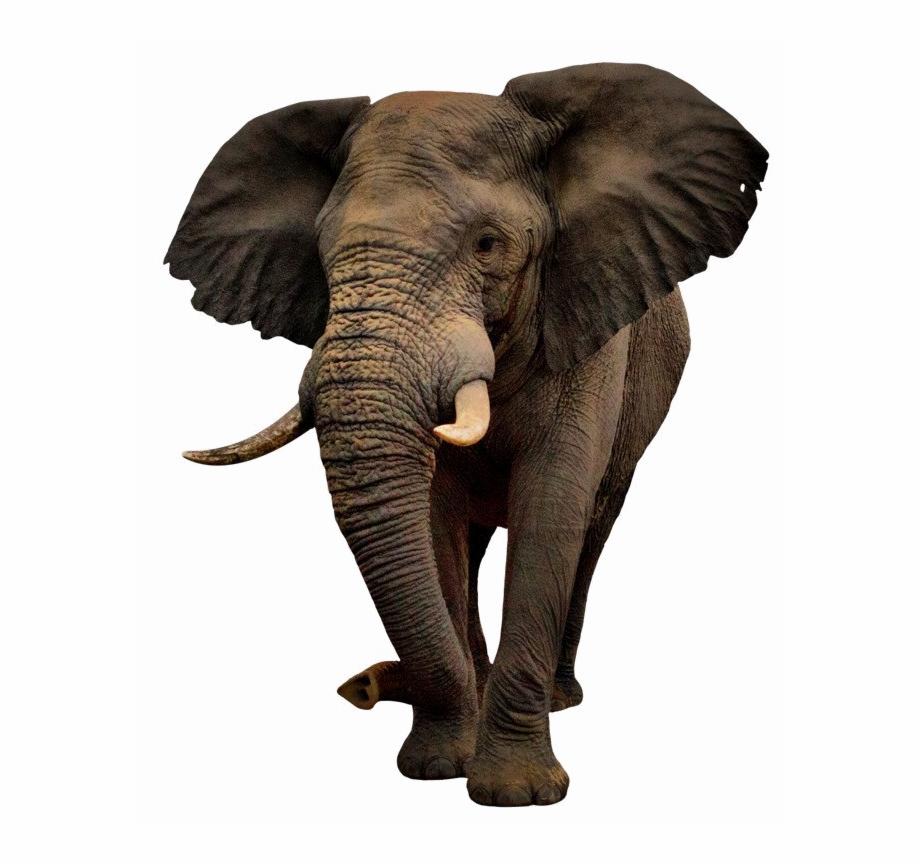 Elephant Png Image Background.