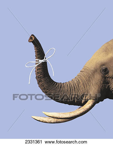Elephant Trunk Clipart (92+ images in Collection) Page 1.