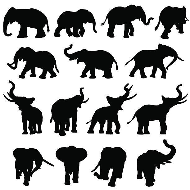 Best Elephant Trunk Illustrations, Royalty.