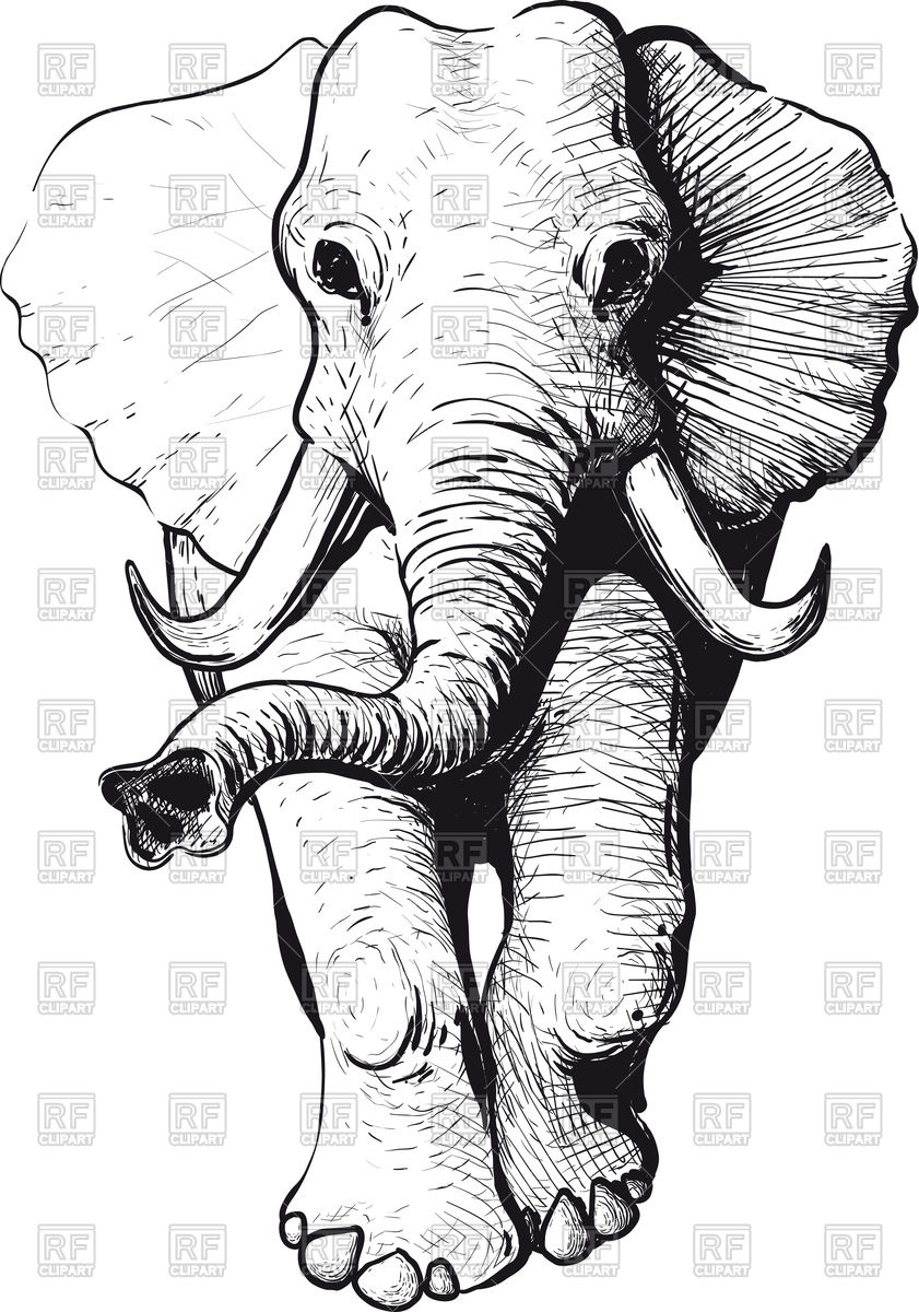 Drawings Of Elephants With Trunk Up at PaintingValley.com.