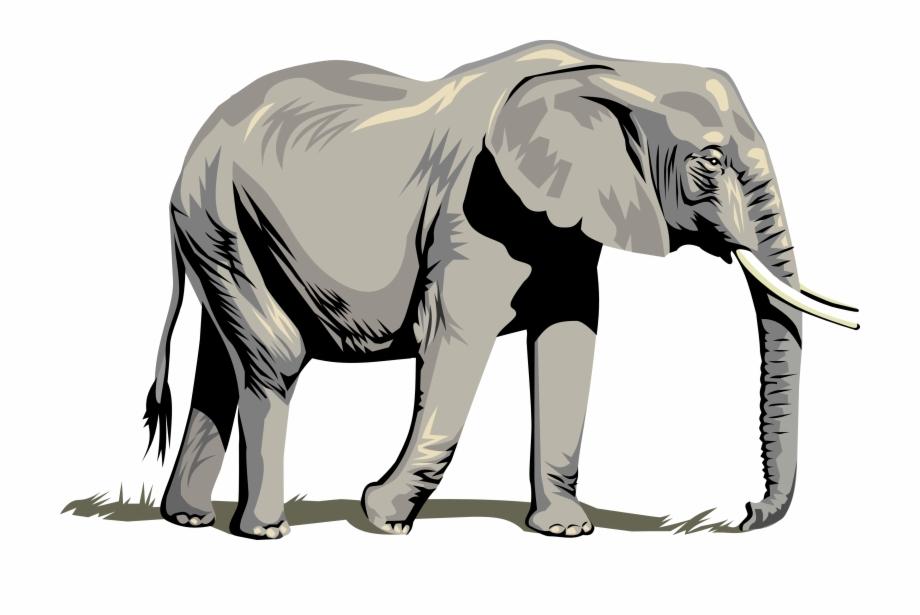 Elephant Vector Art.