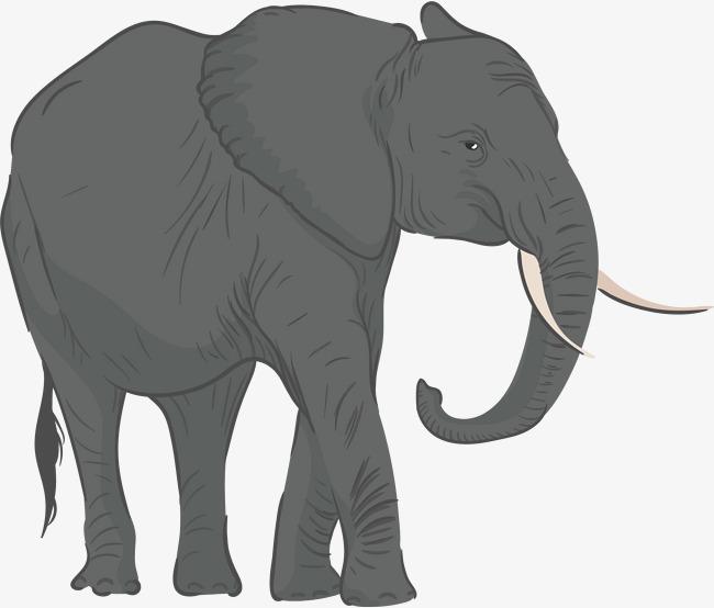 Gray Elephant Vector, Elephant Clipart, #72232.