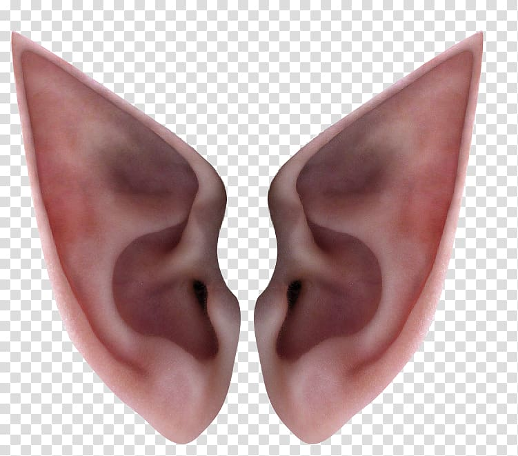 Person's ears, Ear Elf Icon, Elf ears transparent background PNG.