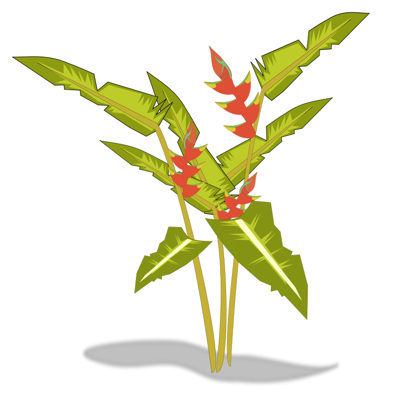 Free Heliconia Clip Art.