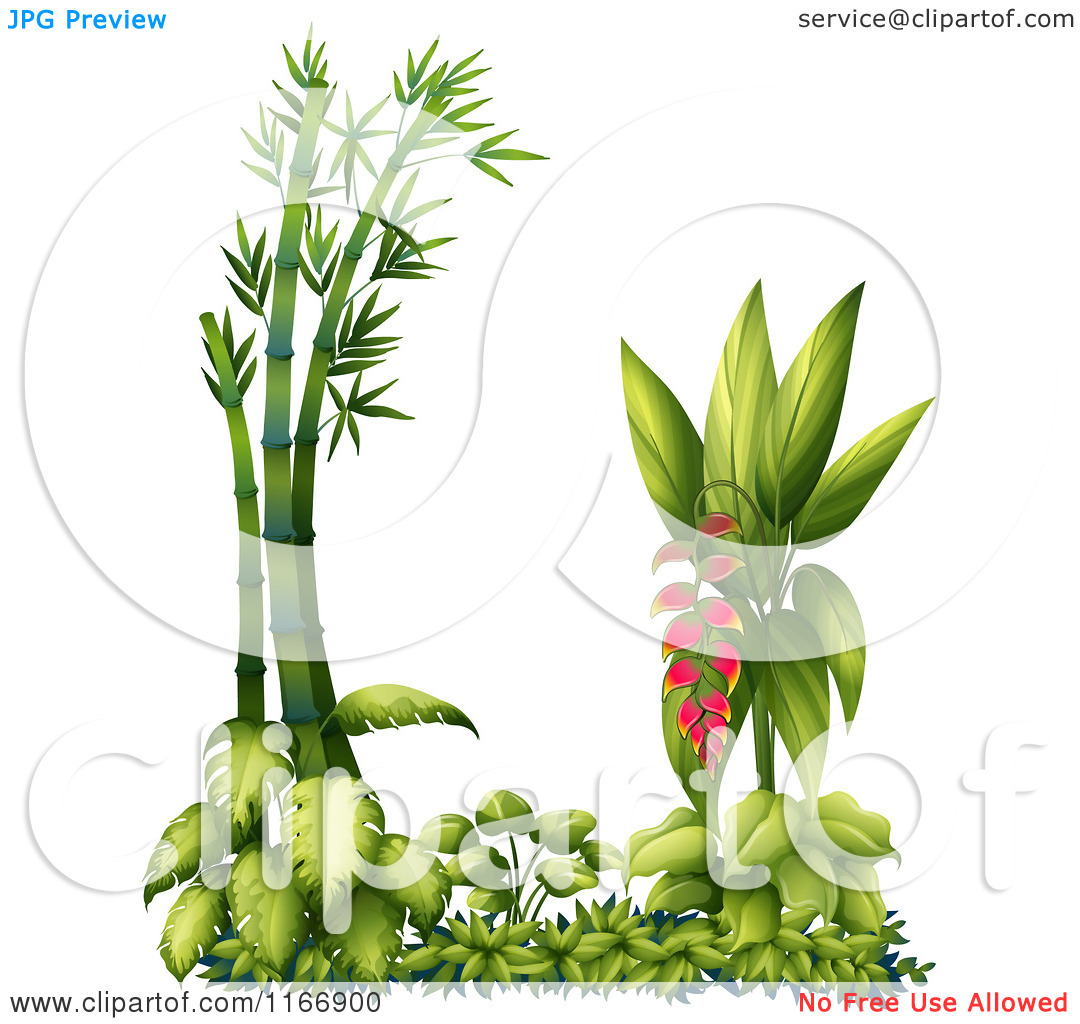 Cartoon of a Heliconia Pendula Plant with Bamboo.