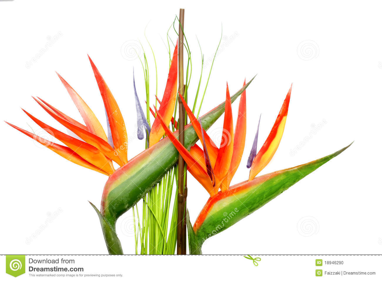 Orange Heliconia Stock Photos.