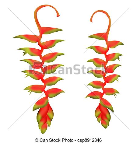 Heliconia Illustrations and Stock Art. 114 Heliconia illustration.