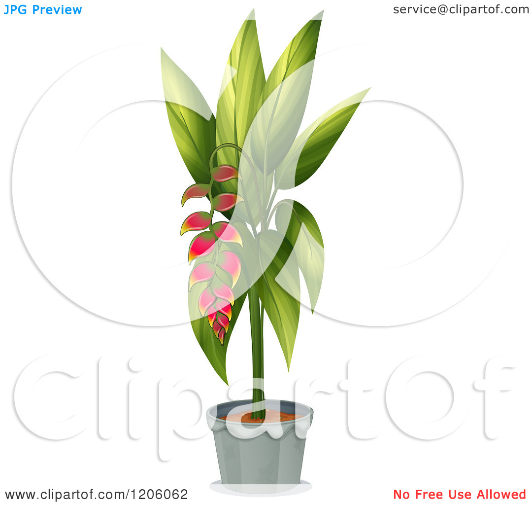 Cartoon of a Potted Heliconia Plant.