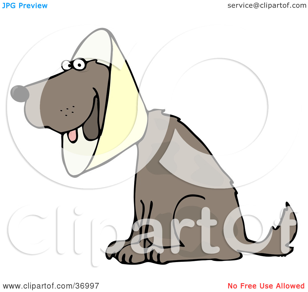 Clipart Illustration of a Brown Dog Wearing An Elizabethan Collar.