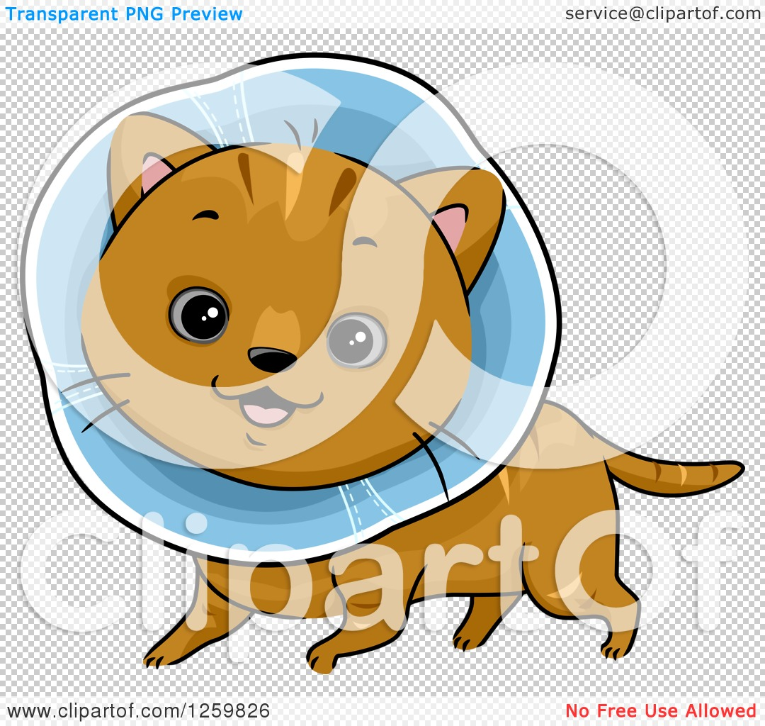 Clipart of a Happy Brown Cat Wearing an Elizabethan Collar.